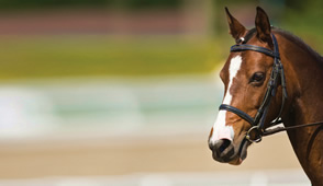 New Zealand Equine Dentistry provides an experienced team of equine dentists New Zealand wide